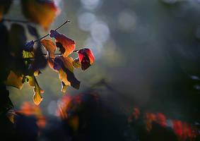redgreenblue by tsigane