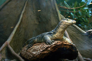 Reptiles4 by KasStock