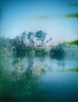 Algae by JillAuville