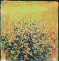 Burning Red Clover by JillAuville