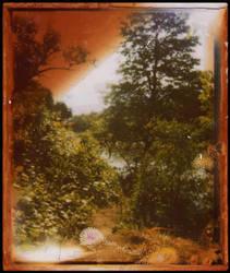 Redwood by JillAuville
