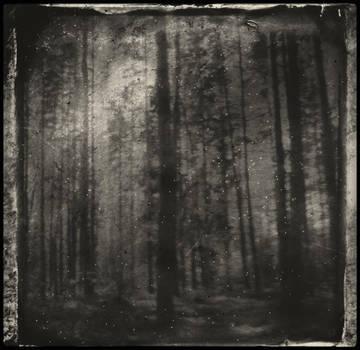 Trollwood by JillAuville