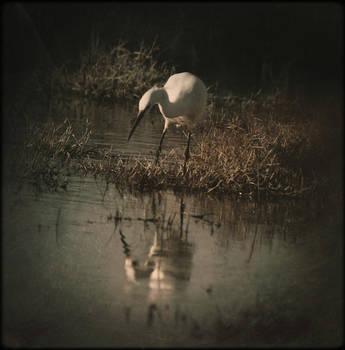 Stalker by JillAuville