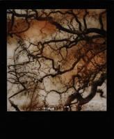 Oak by JillAuville