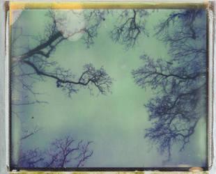 From Below by JillAuville