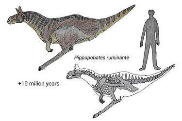 Evolution of Kangaroos- +10 my by RaresAnimals