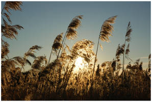 Coucher de soleil by lipickwick