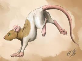 Ratty Zorrah by MaskedHusky