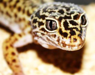 Gecko by GarfieldLeChat