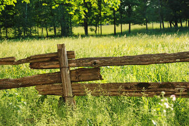 Fence by TheBug