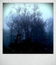 A Foggy Winter's day by mystique87