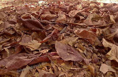 Autumn's leaves near a mosque in Karachi by jsf-35