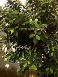 green plants  by jsf-35