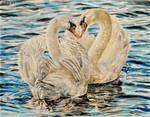 Swan Love by WouldStalkHorses