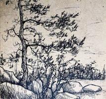 Pine-tree sketch by bsshka