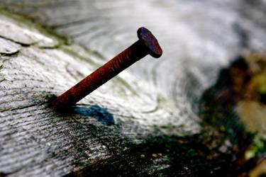 Nail in Wood by bonesandbutterflies