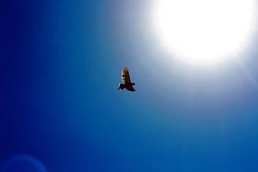 Fly to the Sun by bonesandbutterflies
