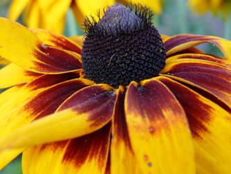 flower III by zyrafa