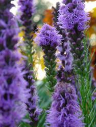 flower IV by zyrafa