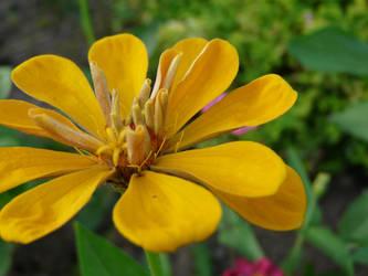 flower VI by zyrafa