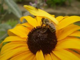 Bee on flower by Hrasulee