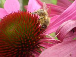 Bee by Hrasulee