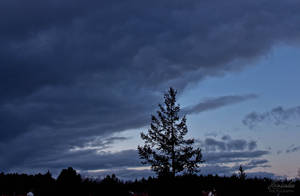 Tree in the Dark by Hrasulee