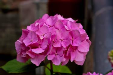 Flower by Hrasulee