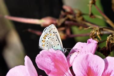 A little butterfly by Hrasulee