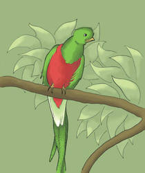 Quetzal by Saevus