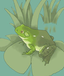 Frog by Saevus