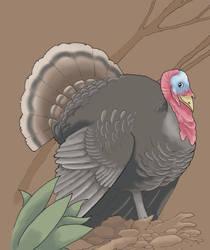Turkey by Saevus