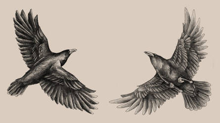 Huginn and Muninn by Saevus