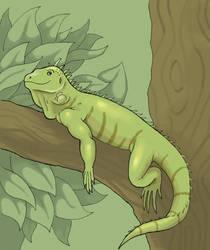Iguana by Saevus