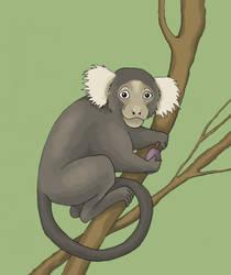 Monkey by Saevus