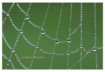 Morning dew 2 by Vamaena