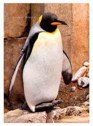 King Penguin by Vamaena
