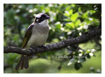 Birdie by Vamaena