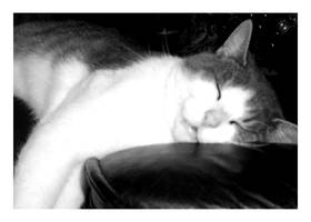 Sleepy Cat by FDQ