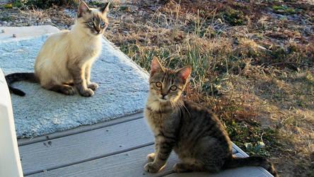 Porch Kittens by Frankief
