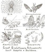 Invertebrate Adaptations by Scutigera
