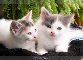Cats by eva1504