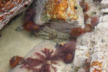 Sea creatures by MysticalPeridot