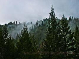 Mystic Woods by CSMediaCreations