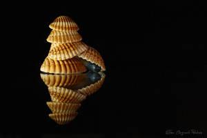 Shells2 by TPoulsen
