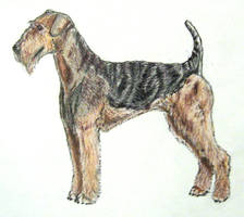 Dog Breed Challenge - 'A' by forgottenones