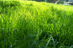 grass by somethingwithblonde