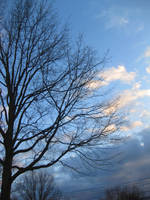 tree and clouds by iluvhorsez1297