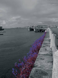 flowers by ciaranmc