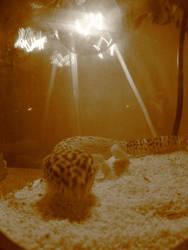 my lizard by ciaranmc